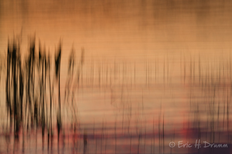 Reeds at Sunset, Eagle Lake, Almaguin Highlands, Ontario