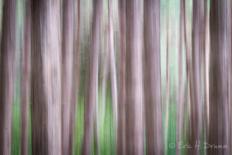 Forest Pines I, Copeland Forest, Oro-Medonte, Ontario