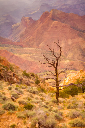 Canyon View and Tree, Desert View Lookout, Grand Canyon, Arizona