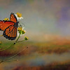 theQueen butterfly