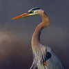 Great Blue heron - Lake Apopka