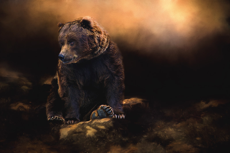Grizzly bear morning