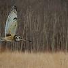 Winter Woods flybye