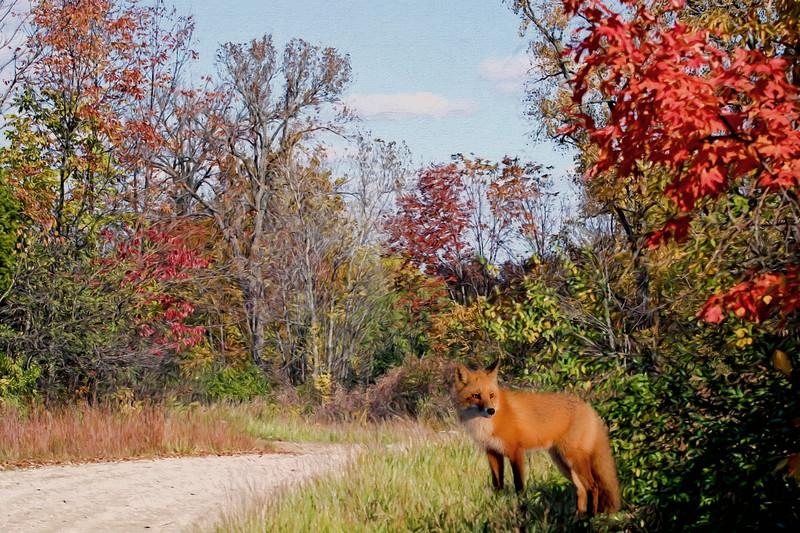 Autumn hunt