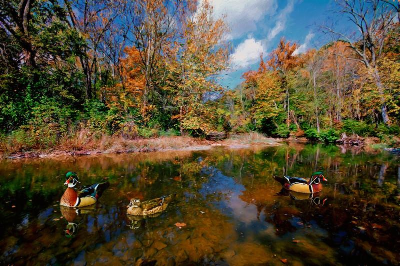 Woodduck creek