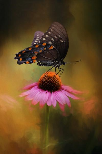 Tiny dancer - black tiger <br /> swallowtail