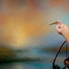 Great Egret sunset