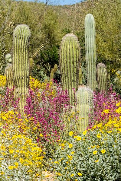 The desert bloom