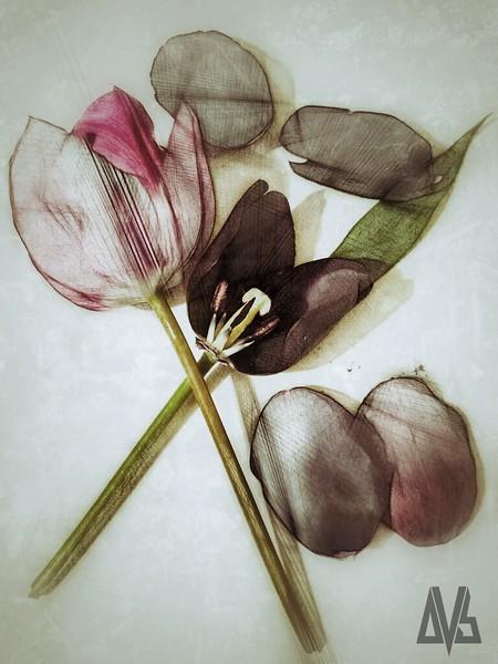 'Still Life w. Tulips'