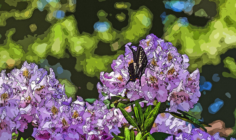 Painted Lady on Purple Bloom