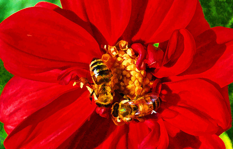 Honey Bee Pair