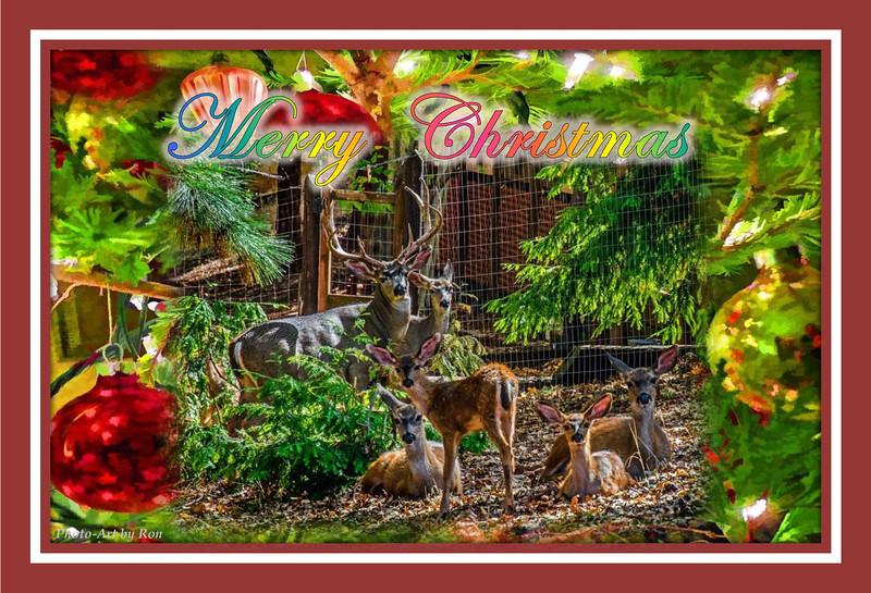 My Deer Friends at Christmas