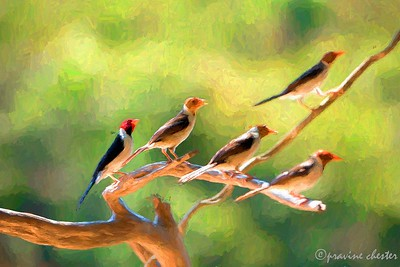 Birds on a limb