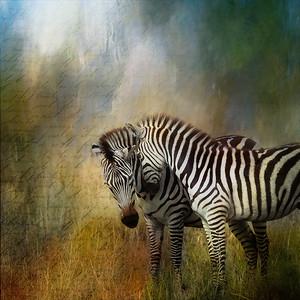 Two Zebras Digital Art