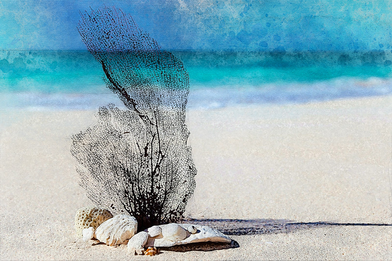 beach sea coast water nature sand coral watercolor