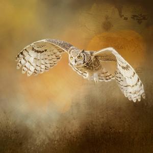 Great Horned Owl Digital Art