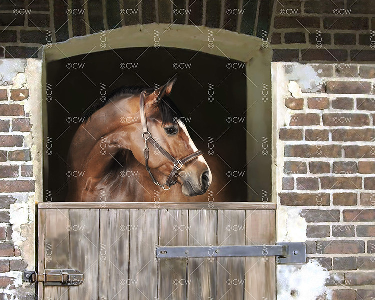 Waiting - mare
