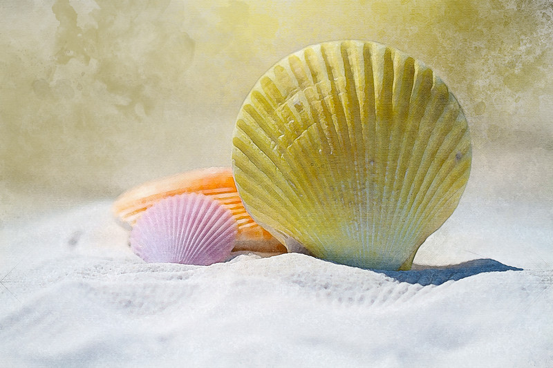 beach seashell shell sand watercolor