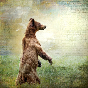 Grizzly Bear Digital Art