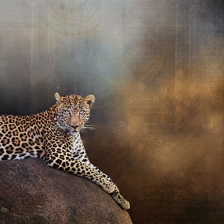 Leopard Digital Art
