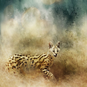 Serval Cat Digital Art