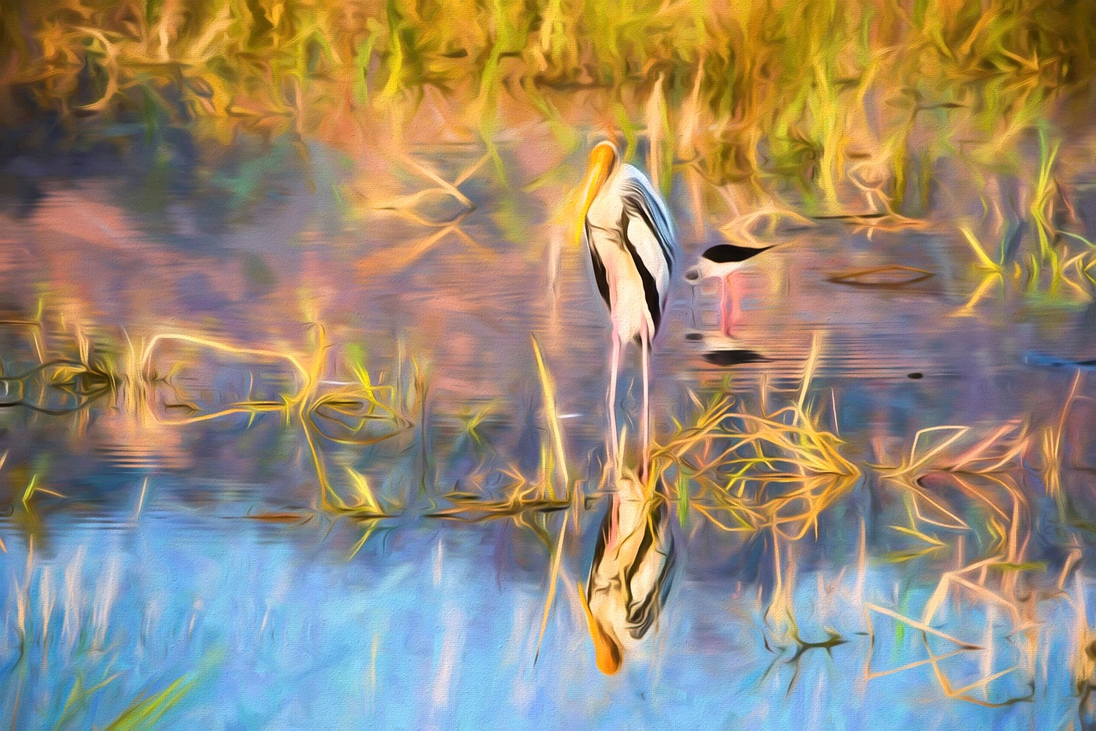Reflection of a stork