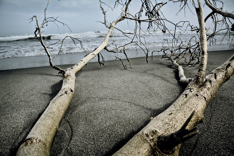 Tree by the shoreline