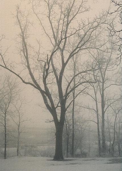 Ohio Winter Solitude