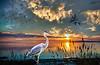 Twilight of the Blue Heron