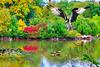 Wood Duck Adventure in the Monster's Lagoon