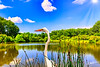 Lake of the Great Egret
