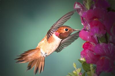 Hummingbird - Second Place Creative