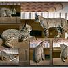 C(3) Don Loseke Bob Cats