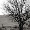 nbw-treeinwinter