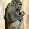 oc-gorilla #2