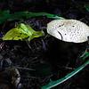 nc-mushroom