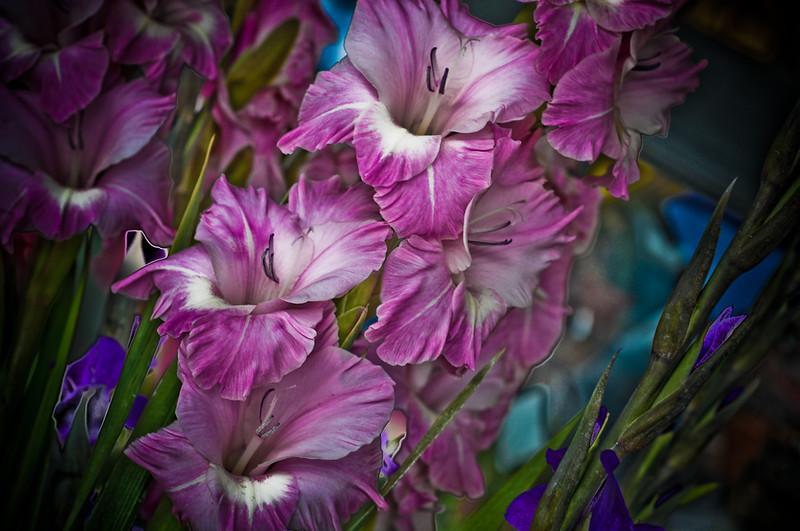 oc-bouquet