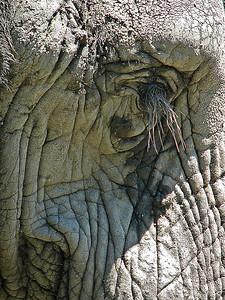nc-high as an elephants eye-