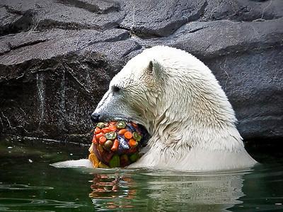 nc-polar bear snack-