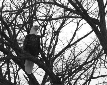 abw-eagle eye-