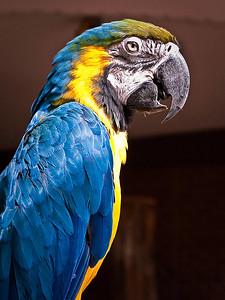 ac-macaw-