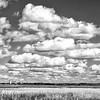 om-Iowa Prairie