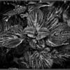 om-leaf texture