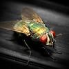 ac-Beautiful Fly