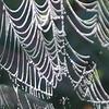 nc-Spider's Chandelier