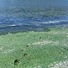 pc-Footprints Through Smelly Beach Algae