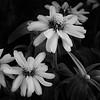 om-Flowers