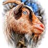 ac-Portrait_ Glamour Goat