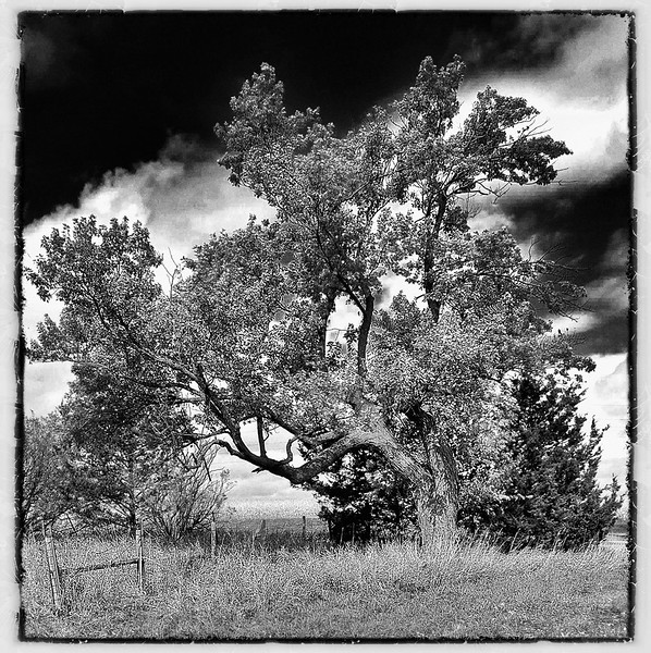 ag-Holloween Tree