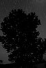 am-Night Time_ Star And Tree Pattern